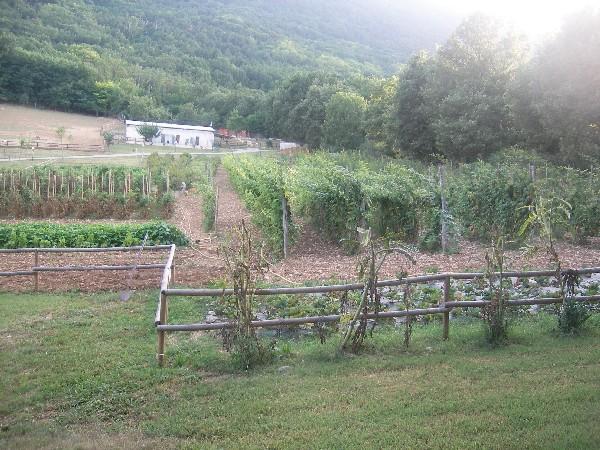 coltivazioni frutti di bosco