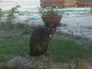 Prigione il gatto dell'Agriturismo Fattoria Antica Forconia a L'Aquila