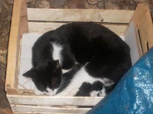 gattini nati in fattoria antica forconia a L'Aquila