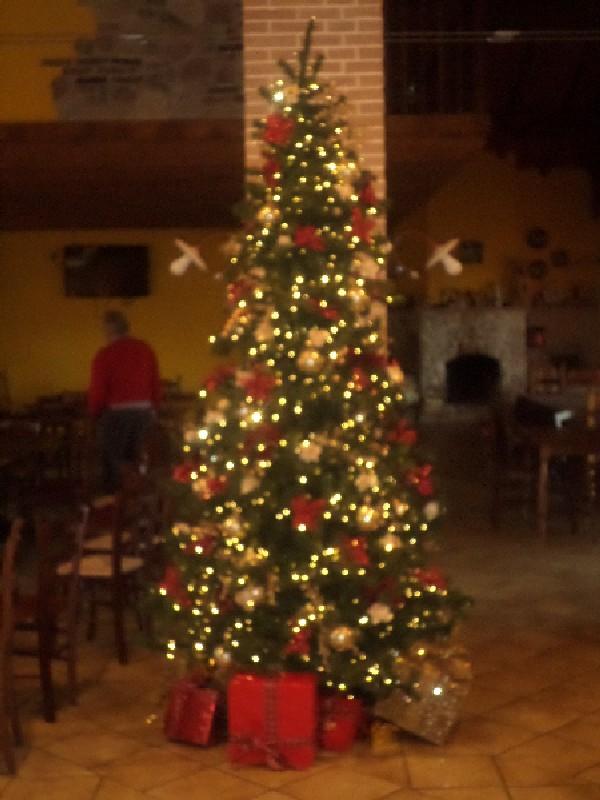 l'albero di natale della Fattoria Antica Forconia