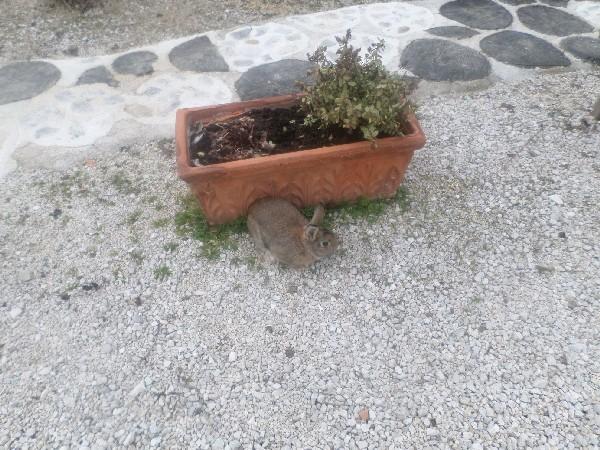 il coniglio filppo in Fattoria