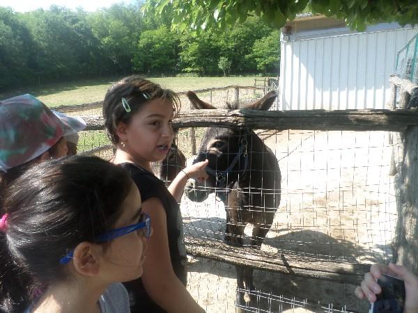 cesare l'asinello con i bimbi in fattoria didattica