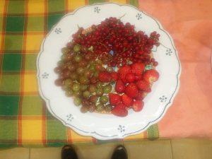 Frutti di Bosco in Fattoria Antica Forconia